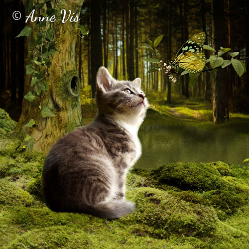 Knor in the Magical Forest