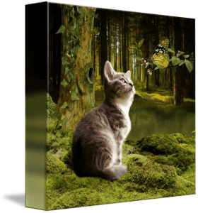 Cat Knor in the Enchanted Forest