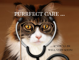 Funny Cat Doctor Get Well Soon Postcard