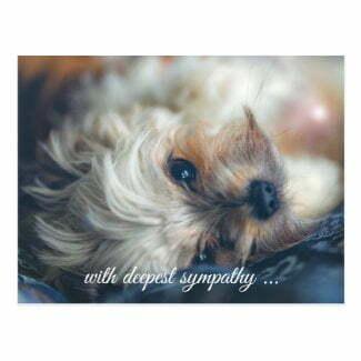 Dog sympathy postcard