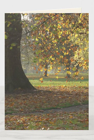 Fall in the park - an autumn sympathy greeting card