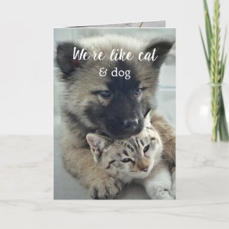 Sweet cat and dog heartwarming Valentine's Day Greeting Card
