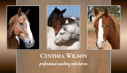 Your photo horse stables business card template